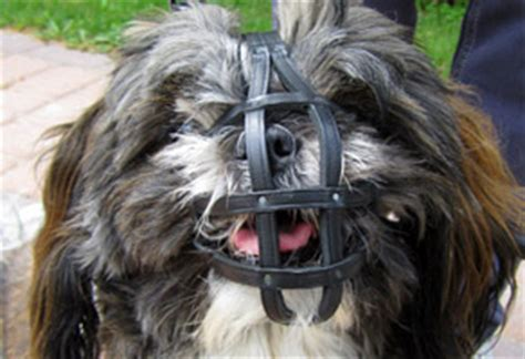 muzzle for shih tzu muzzle shih tzu and other breeds ebay