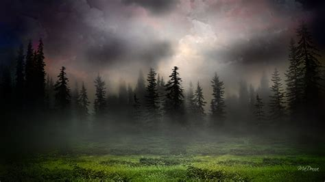 woods background in foggy woods wallpaper allwallpaper in 4968