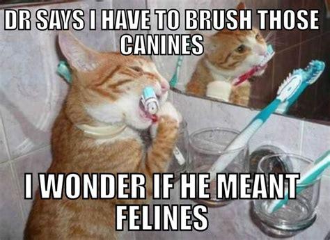 Funny Dental Memes - feline brushing canine meme funny dental pictures