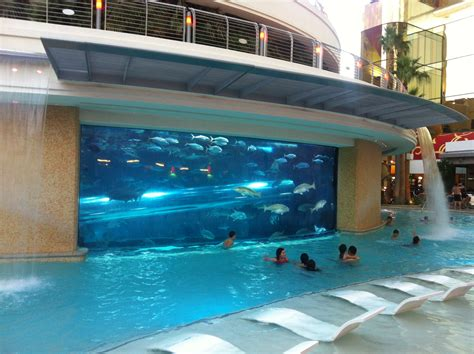 Images Of Golden Nugget Pool