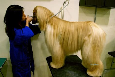 dog groomers come to your house dog groomers that come to house 28 images all breed grooming dog grooming location