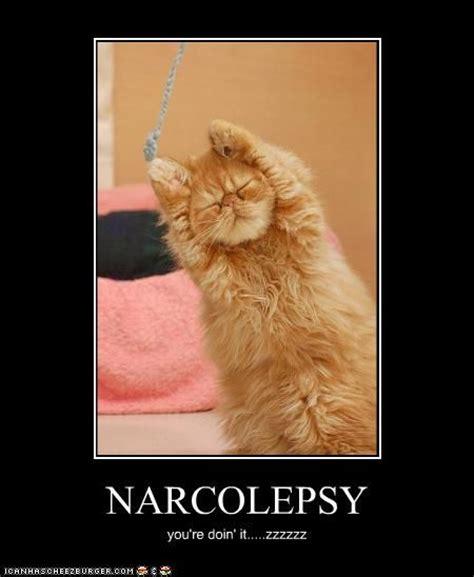 Narcolepsy Meme - funny narcolepsy funny narcolepsy narcolepsy pinterest