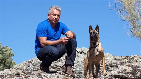 cesar millan s cesar millan s leader of the pack national geographic channel asia