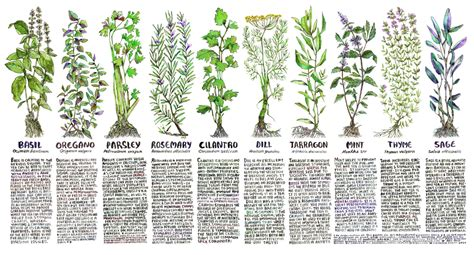 Where To Buy Herb Plants by Kitchen Medicine Poster