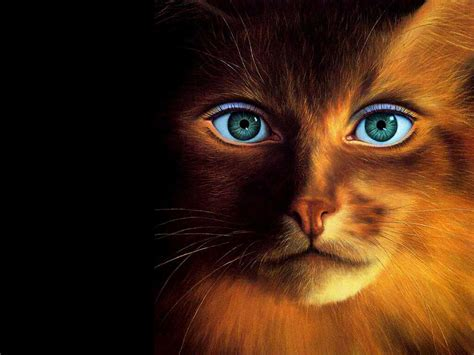 hd wallpaper cool cat funny animal 07 26 11