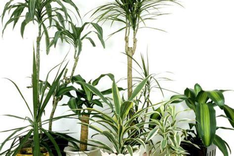 tipi di piante da appartamento le 9 piante da appartamento per purificare l in casa