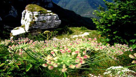 meteo web co dei fiori altopiano asiago sette alpe cimbra altipiani trentini