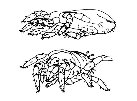 arthropod coloring page arthropod worksheet coloring pages