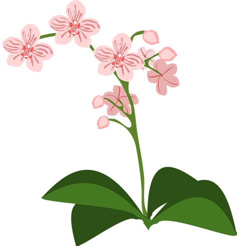 clipart fiori clip flor flora 183 free vector graphic on pixabay