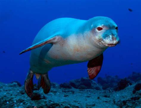 imagenes animales de mar bellisimas im 225 genes de animales marinos para descargar