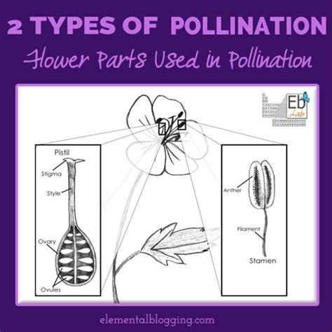Pollination Worksheet Ks2 by The Two Types Of Pollination Elemental Blogging