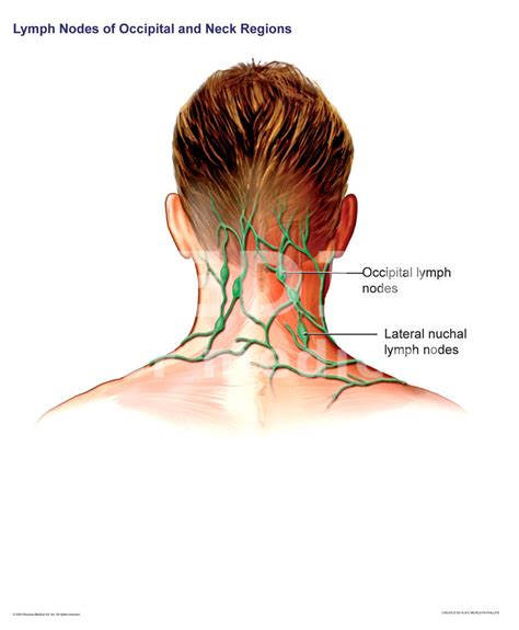 lymph nodes in the neck diagram diagram of lymph nodes in the back of the neck glands at