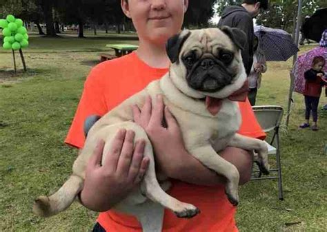 my pug has bumps all his boy with autism has a pug birthday the dodo