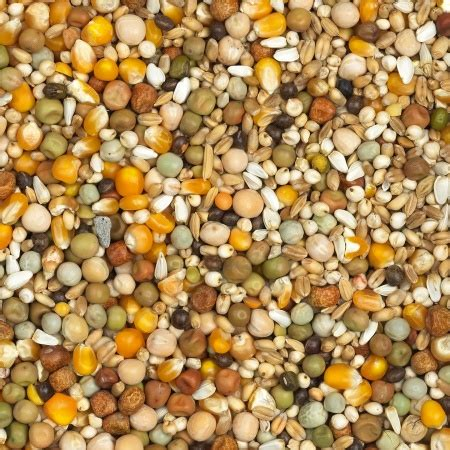 alimentacion suplementos  vitaminas  la paloma mensajeras foro de colombofilia en