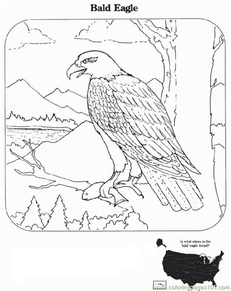 martial eagle coloring pages bald eagle coloring pages coloring home