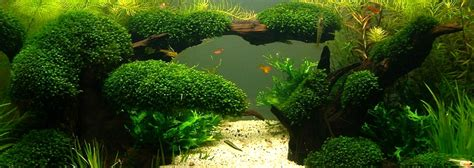 Aquarium Aquascape Vosso Hf 06 Hang On Filter bubbles aquarium aquascapes tank setups projects