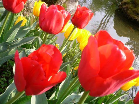 fiori italia sfondi fiori italia flores primavera fleurs