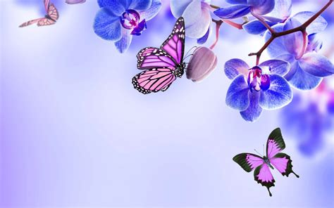 3d Butterfly Flowers Soft beautiful butterflies wallpapers pictures images
