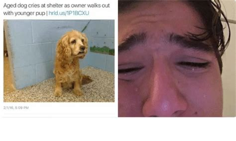 25 best memes about dog crying dog crying memes