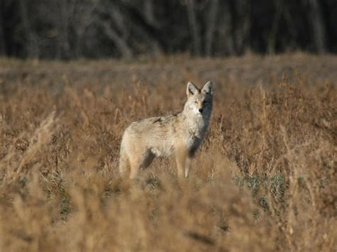 predator hunting | Big Deer