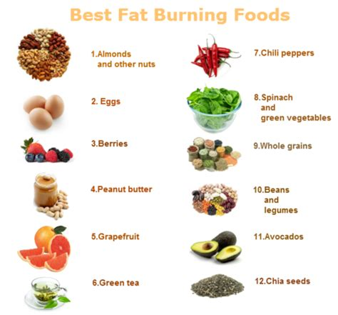 The Best Diet Fats And by Best Ways To Lose Belly Quickly Best Burning Foods