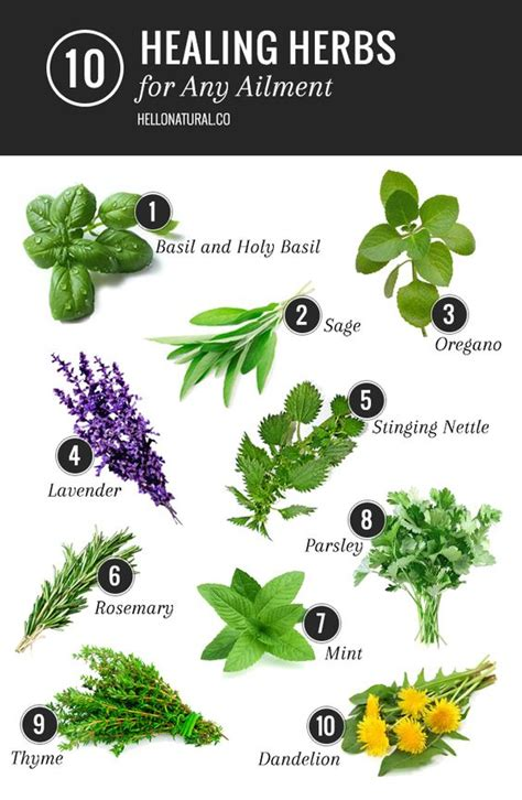 herb grower s sheet gardens health and fresh basil on
