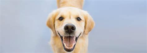free puppy classes at petsmart crate tips petsmart