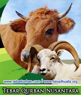 harga kambing kurban tebar kurban nusantara bina