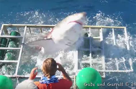 gabbia squali il di uno squalo bianco entra in una gabbia con