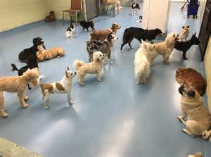 state with the most dog owners state with the most dog owners 100 state with most dog