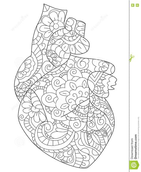 anatomical heart coloring book vector for adults stock