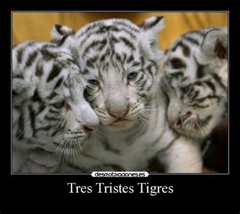 imagenes de tres tristes tigres tres tristes tigres desmotivaciones