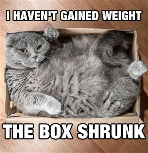 Fat Cat Meme - hilarious fat cat quotes quotesgram