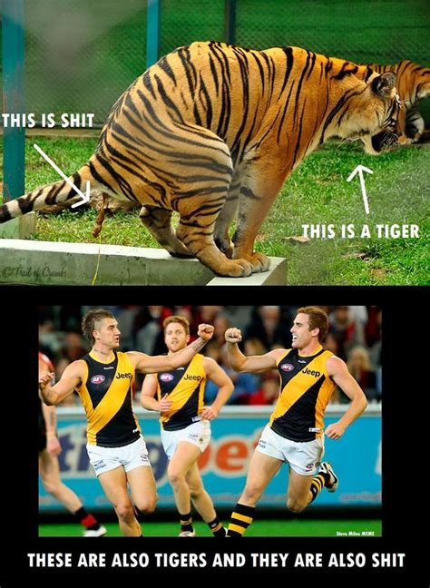 Richmond Memes - richmond tigers afl meme