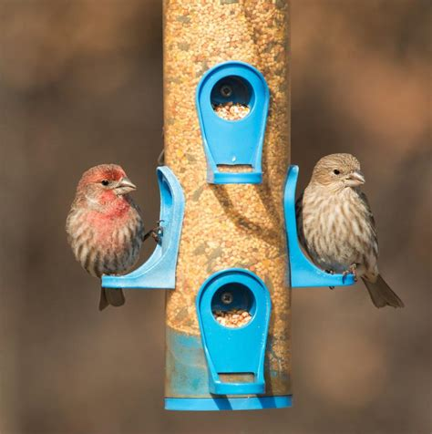 birds choice finch feeder birdcage design ideas