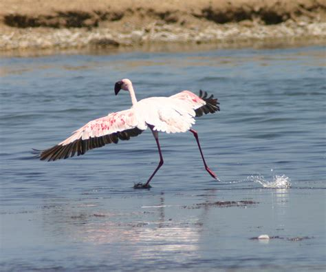 Eagle Flamingo Grey Orange namibia okavango panhandle bird photos