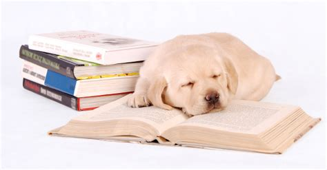 puppy book click for the labrador site