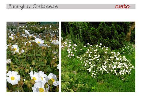 piante mediterranee da vaso piante mediterranee in vaso a f v villa laetitia lungo