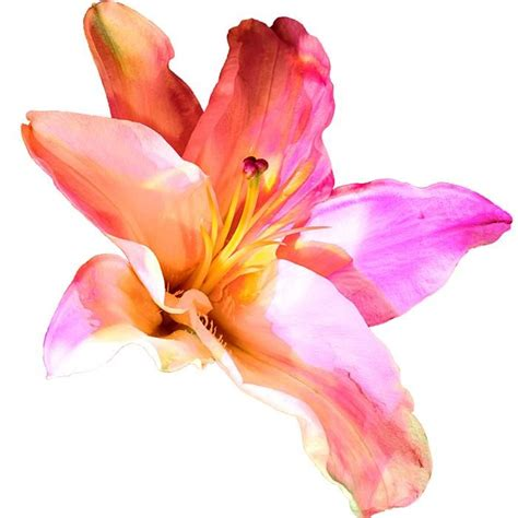 watercolor tattoo lily 17 best ideas about lilies on lillies