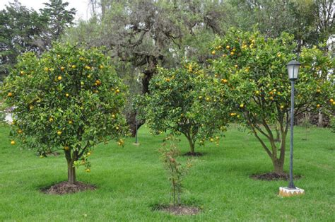 Trees For Backyard Landscaping by 24 Delicious Backyard Fruit Tree Ideas