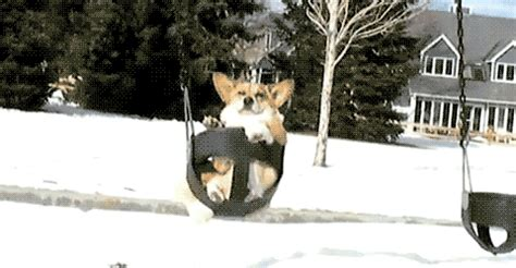 swinging gif dog chill gif find share on giphy