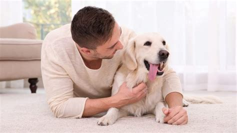 mange in dogs home remedy best home remedies for mange in dogs causes and treatment