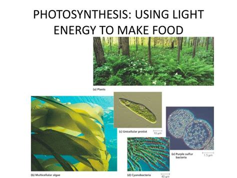 ppt photosynthesis using light to make food powerpoint