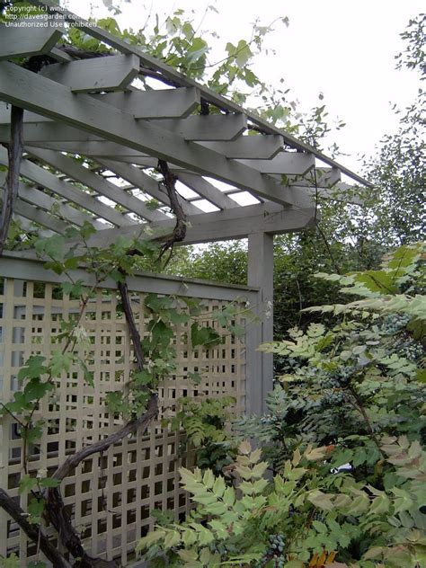 garden trellis design specialty gardening cottage garden trellis designs 1 by wind
