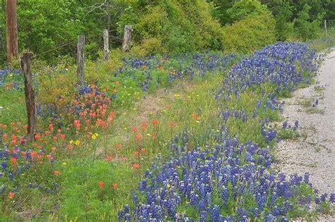 photo 853 10 roadside with bluebonnets of cedar hill rd from brenham