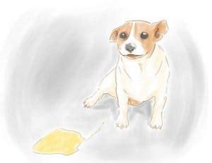 get rid of dog urine smell in house best skunk odor remover homestead survival