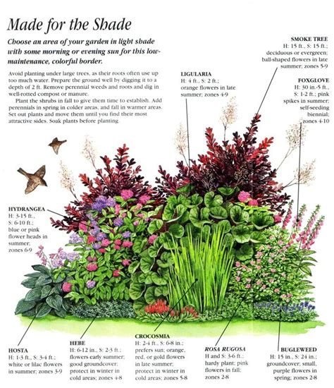best 25 shade garden ideas on pinterest