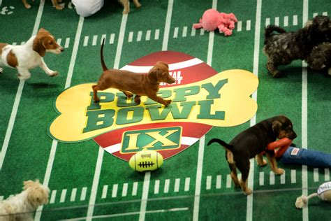 puppy bowl teams you can draft your own puppy bowl 2014 football team stylecaster