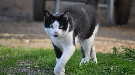 wann kastrieren katze wenn die katze schwanger ist tiergesund de
