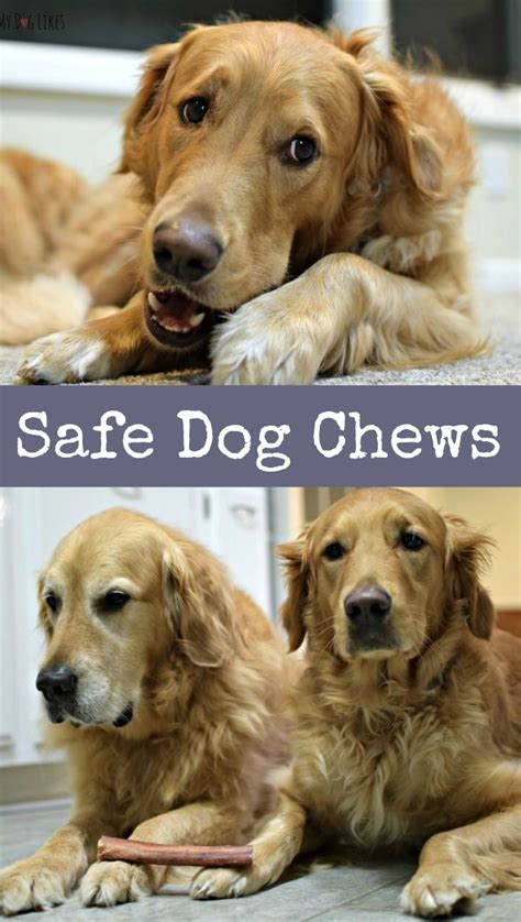 are bully sticks safe for dogs 17 best ideas about bully sticks for dogs on bully sticks chews and